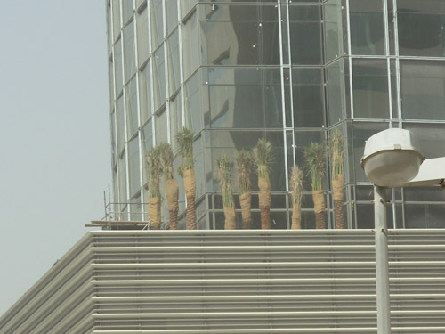 Photo of Palm Trees on a Building